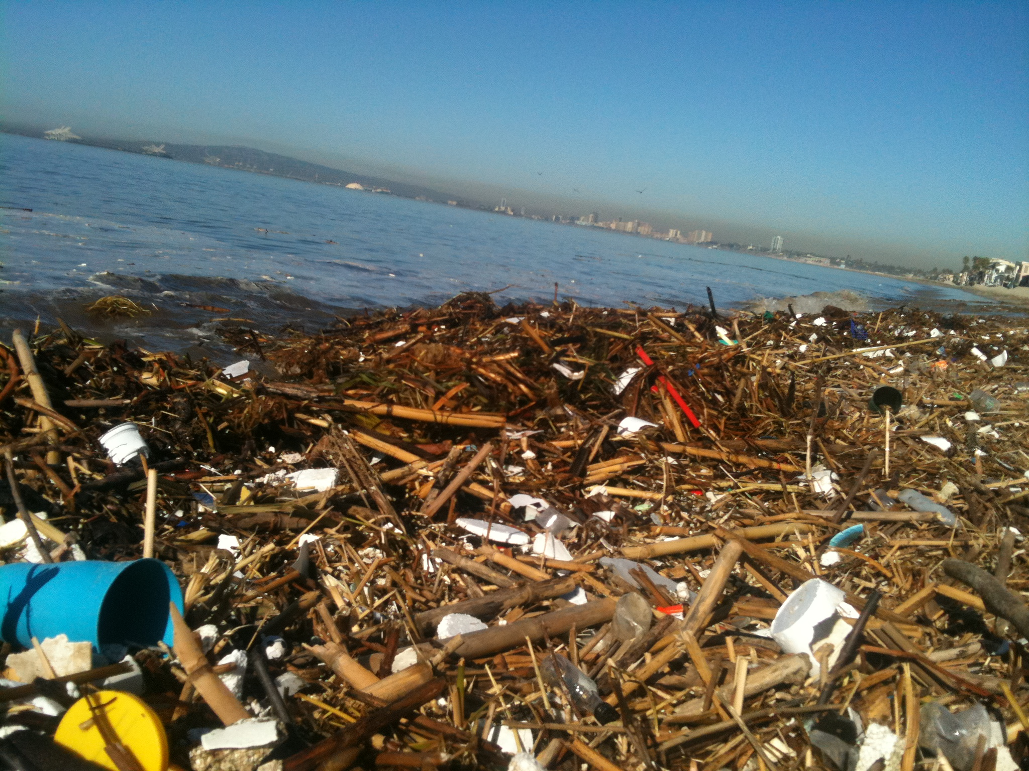 the issue of shoreline pollution